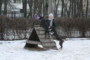 Scouthound Joker & Florianna Scouthound s Almaznogo Ostrova
