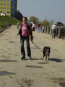 Scouthound Joker