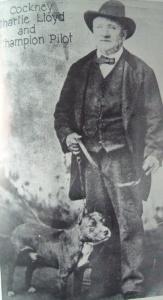 Чарли Ллойд, известный так же как «Кокни Чарли» и его питбультерьер Pilot, конец 19 века