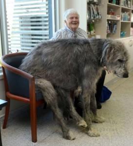 büyük-köpek-9