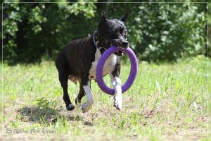 Florianna Scouthound s Almaznogo Ostrova